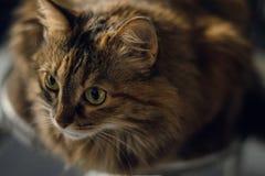 嬉戏的神色猫 库存照片