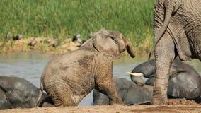 嬉戏非洲婴孩的大象 免版税图库摄影