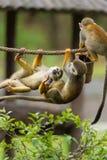 猴子使用 库存图片