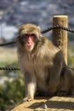 猴子公园,京都 库存图片