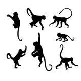 猴子剪影汇集-例证 库存图片