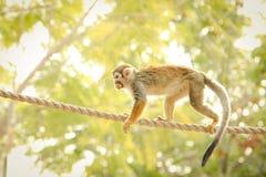 猴子吃 免版税库存照片