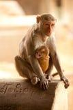 猴子和婴孩 免版税库存照片