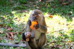 猴子和婴孩 免版税库存图片