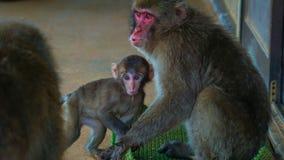 猴子和婴孩 免版税图库摄影