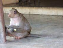猴子在亭子 库存照片