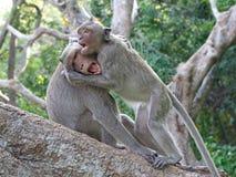 猴子在亭子 库存图片