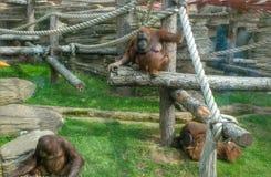 猴子在动物园里 免版税库存照片