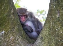 猴子在寿山,猴子山在高雄 城市12 免版税库存照片