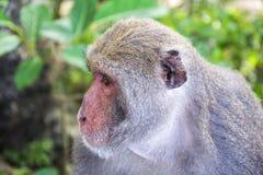 猴子在寿山,猴子山在高雄 城市12 免版税库存图片