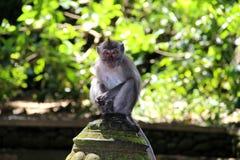 猴子在森林里 免版税库存图片
