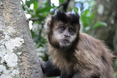 猴子在森林 免版税库存照片