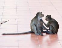 猴子在泰国 免版税库存图片