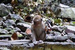 猴子在黑风洞 库存图片