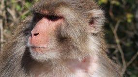 猴子在Ayubia 免版税库存照片