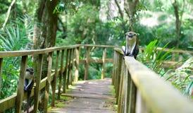 猴子坐栏杆 免版税图库摄影