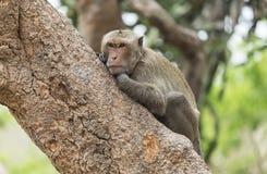 猴子坐的结构树 免版税图库摄影