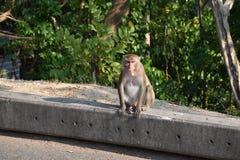 猴子坐街道 免版税库存图片