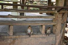 猴子坐 免版税库存图片