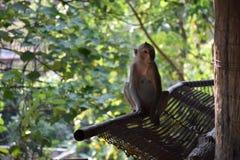 猴子坐 免版税图库摄影