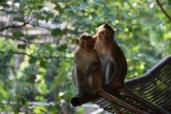 猴子夫妇坐 库存照片