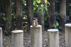 猴子夫妇 免版税图库摄影