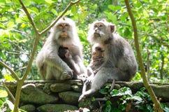猴子家庭在森林里 免版税库存照片
