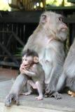 猴子家庭 免版税图库摄影