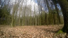 滑子射击了树在森林里 股票录像