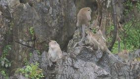 猴子并且吃坐岩石 在Khao Ngoo岩石公园, Ratchaburi,泰国 股票视频
