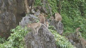 猴子并且吃坐岩石 在Khao Ngoo岩石公园, Ratchaburi,泰国 影视素材