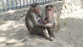 猴子拥抱 免版税库存图片