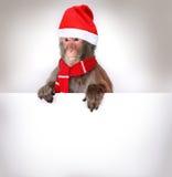 猴子拿着圣诞节横幅的圣诞老人 图库摄影