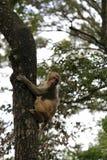 猴子攀登树 免版税图库摄影