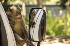 猴子有趣在镜子 免版税库存照片