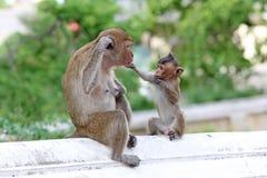 猴子本质上 库存照片