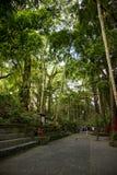 猴子森林和高大的树木 库存图片