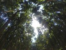 猴子森林 库存照片