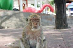 猴子母亲 库存照片