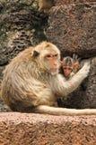猴子母亲 免版税库存图片