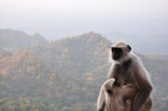 猴子母亲 免版税库存照片