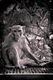 猴子照片写真这是有趣的运动在天 图库摄影