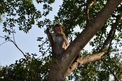 猴子爬树并且看照相机 免版税库存照片