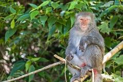 猴子特写镜头 免版税图库摄影