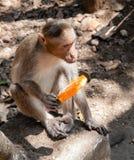 猴子用冰淇凌 免版税库存照片