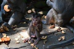猴子的微笑的崽 免版税库存照片