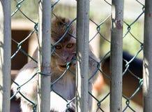猴子的监狱 免版税库存照片