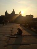 猴子的黎明 免版税图库摄影