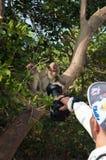 猴子看在海岛酸值Ped的照相机 免版税库存图片