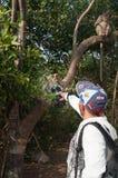 猴子看在海岛酸值Ped的照相机 图库摄影